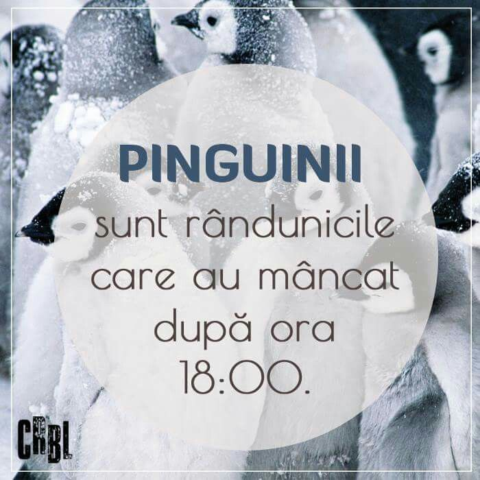Pinguinii sunt randunici care au mancat dupa 18.00