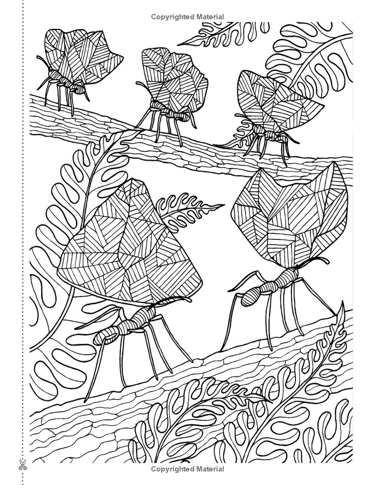Secret Eden antistress art therapy colouring book