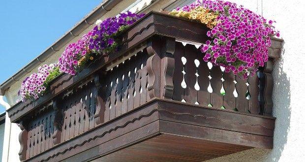Гъбични заболявания при градинските и балконските цветя