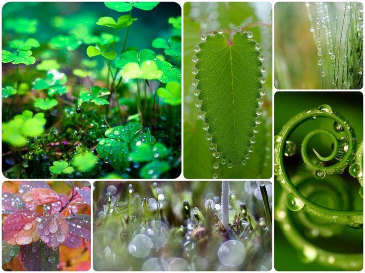 Picături de #roua #fresh #due #green #moodboard