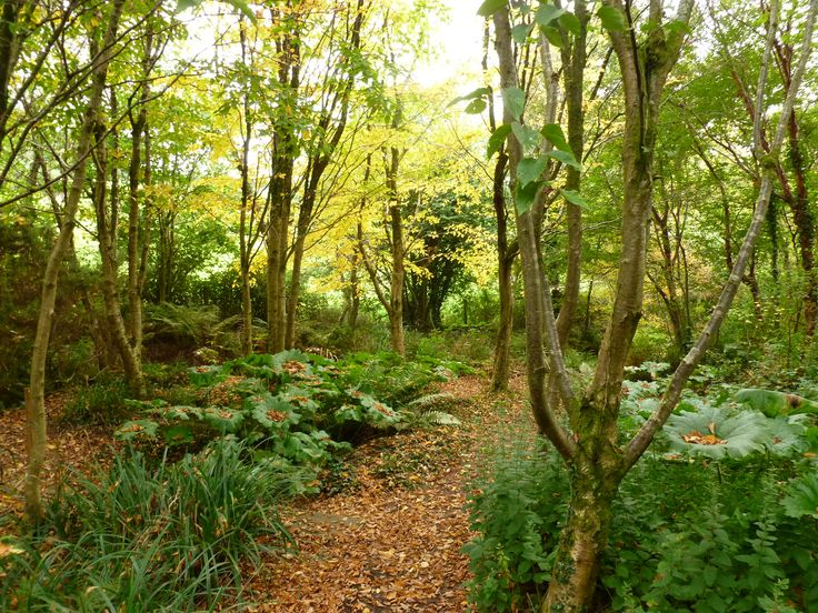 8 best autumn in stone lane gardens images on pinterest birch find this pin and more on autumn in stone lane gardens by stonelanegarden workwithnaturefo