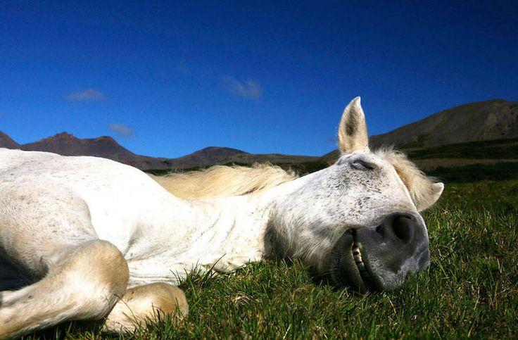 Дикие лошади Исландии в снимках Bragi J. Ingibergsson (Интернет-журнал ETODAY)