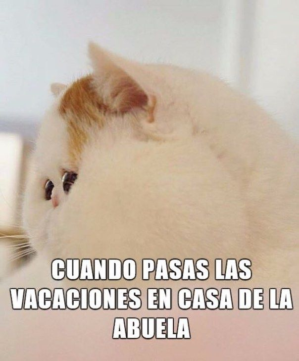 videoswatsapp.com videos graciosos memes risas gifs graciosos chistes divertidas humor http://ift.tt/2lVJ8d3
