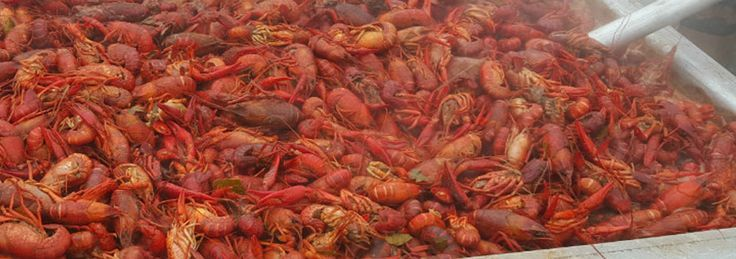 The Do's and Don'ts of boiling crawfish from the owner of Geaux Creole and multiple award winning boiler! It is true that 100 people will boil crawfish 100 different ways. Just know these suggestions work extremely well for me!