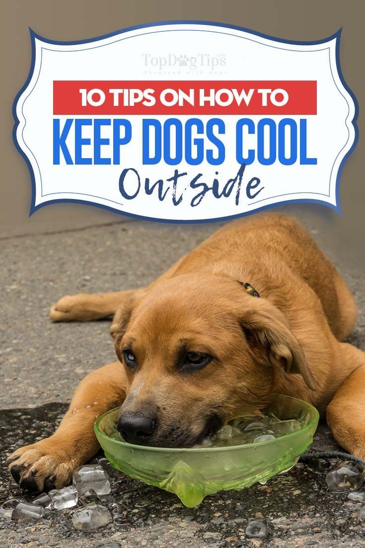 10 Ways To Keep Dogs Cool Outside In Summer Summer Dog Treats