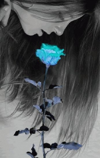 Beautiful colorful pictures and Gifs: Flowers photos