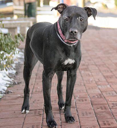 Dog Adoption Search Results - North Shore Animal League America