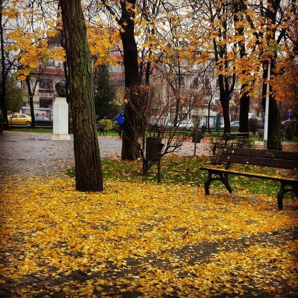 #fall #yellowleaves #melancholy #rainyday #Bucharest #Dorobanti neighborhood