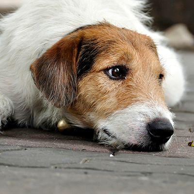 Nagyon jó okok arra, miért fogadj örökbe kutyát