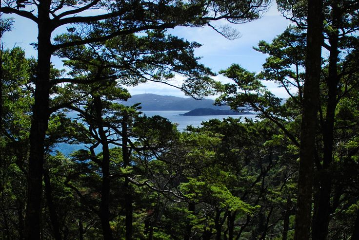 Busy up here in the trees near Days Bay by imajane - Photo 153054157 - 500px