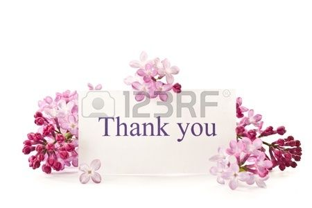 beautiful flowers blooming lilac on a white background