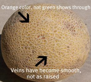 How to pick a ripe cantaloupe, watermelon & cherries