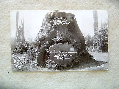 "The ""Del Norte Wonder Tree"",Redwood Hwy, California-EARLY 1900'S PHOTO POST CARD"