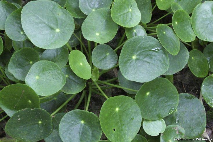 Les 150 meilleures images du tableau jardin d 39 int rieur sur pinterest plantes d 39 int rieur - Comment tailler un yucca ...