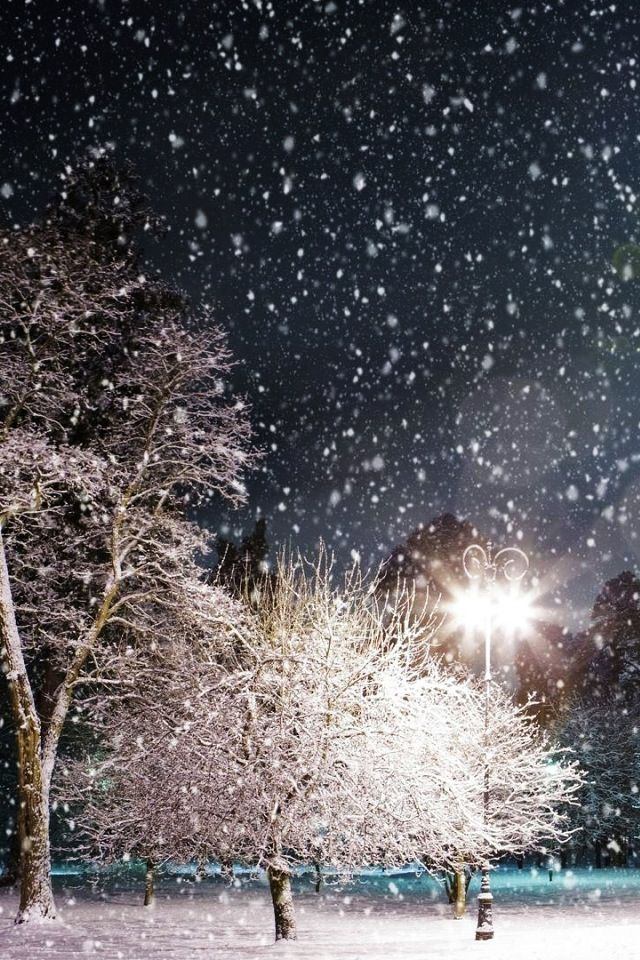 Winter wonderland #winter #snow #nature