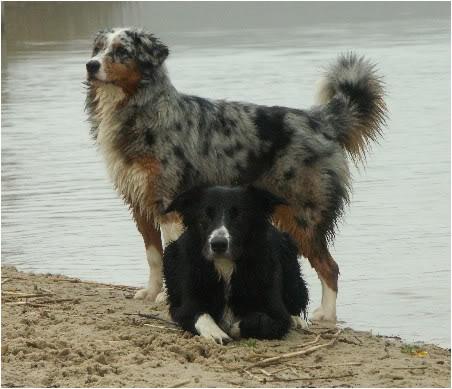 de lievelings honden