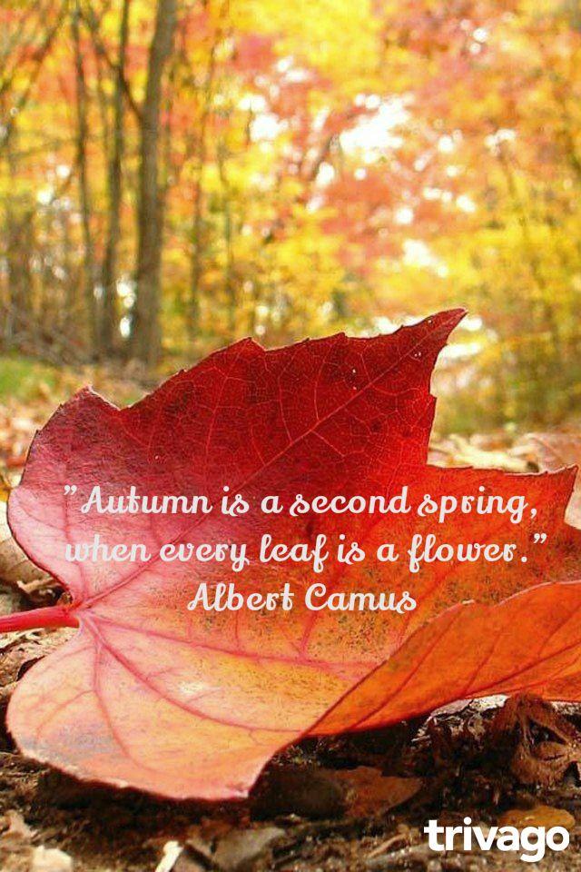 """""""Το φθινόπωρο είναι μια δεύτερη άνοιξη, όπου κάθε φύλλο είναι ένα λουλούδι."""" Albert Camus #autumn #quotes"""