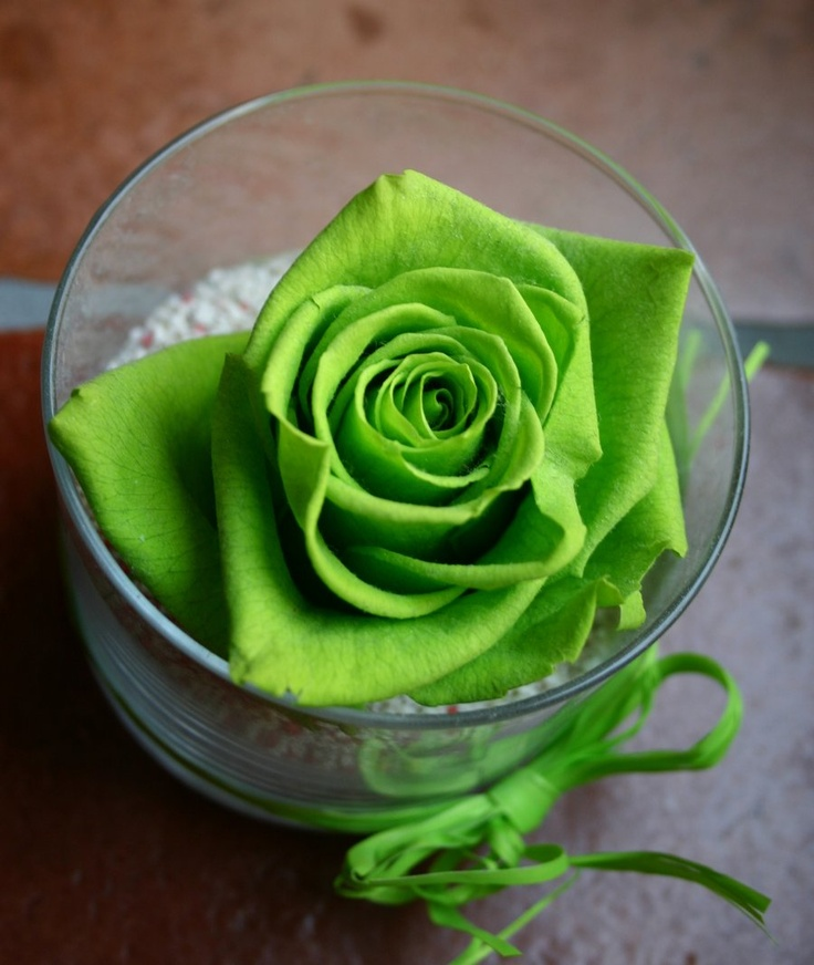 1000 images about green rose on pinterest jade green for Green colour rose images