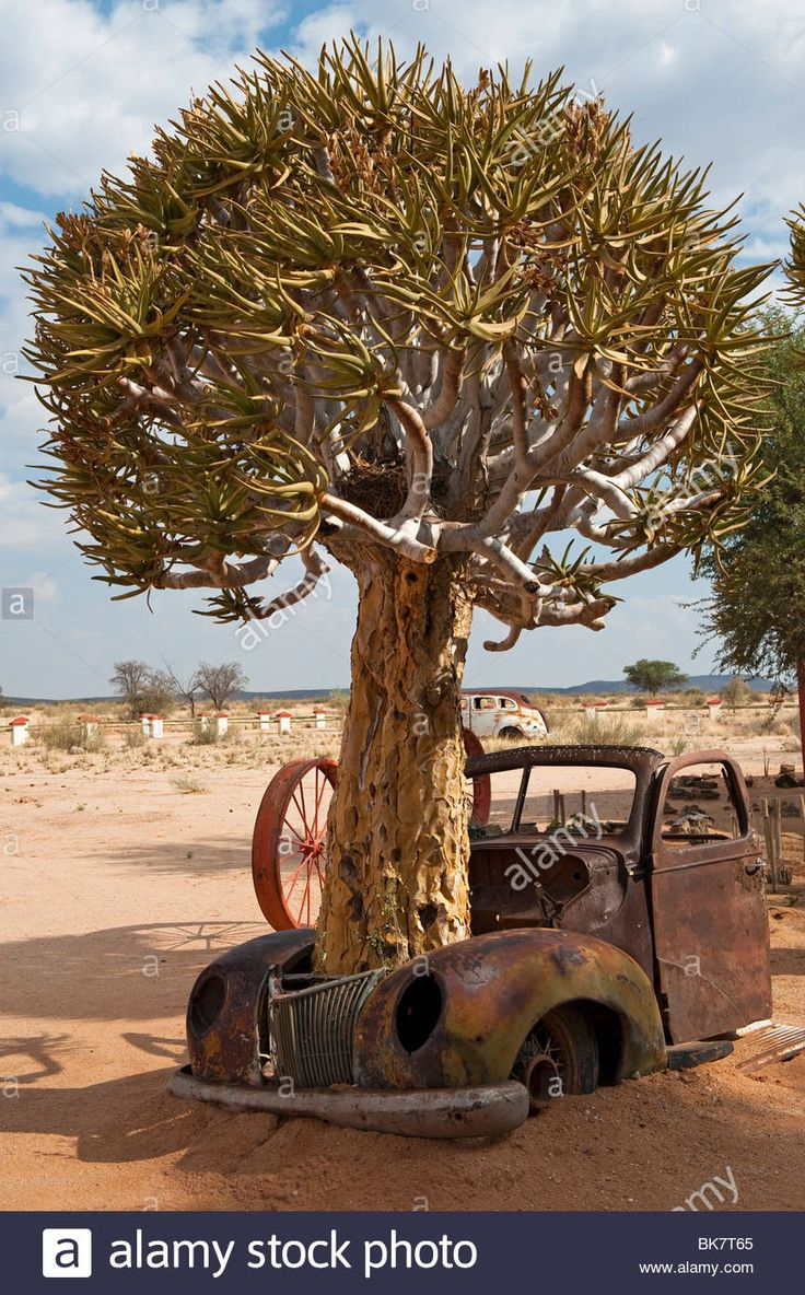 Little red wagon funny car pictures car canyon - 109 Best Cars Trees Married Images On Pinterest Abandoned Cars Abandoned Vehicles And Abandoned Places