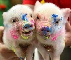 : Piglets, Little Pigs, Teacup Pigs, Minis Pigs, Baby Pigs, Painting, Teacup Piggy, Pet Pigs, The Color Running