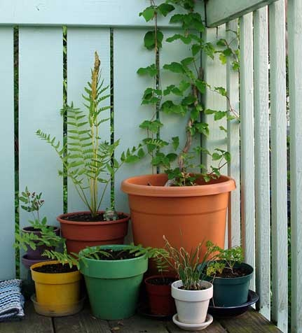 Find this Pin and more on Balcony Gardening Ideas by jlsisrad. 52 best Balcony Gardening Ideas images on Pinterest