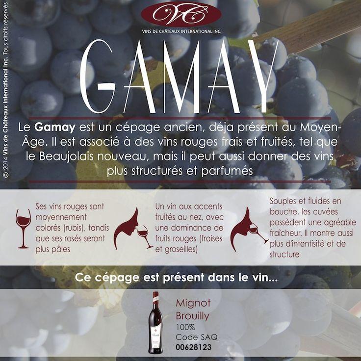 Retrouvez le cépage Gamay dans le Brouilly Mignot, vin Beaujolais, présent dans vos SAQ (code 00628123), et en ligne http://www.saq.com/page/fr/saqcom/vin-rouge/mignot-pere--fils-brouilly/628123