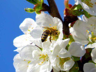 Mielamore 2017. Un'autostrada delle api da Panicale alle zone terremotate