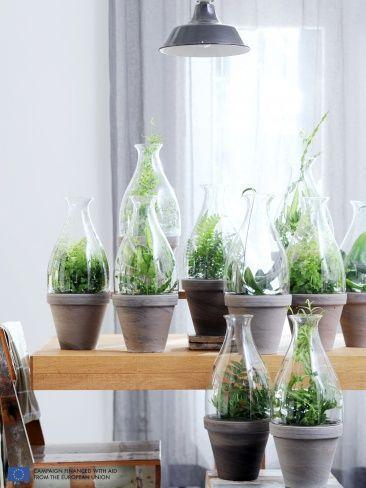 123 best house plants images on pinterest succulents for Indoor gardening glasses