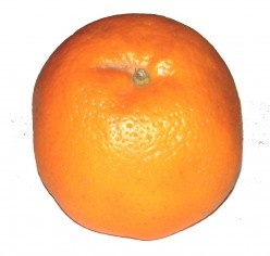 Picture (photo) of an orange - Oranges are juicy fruits