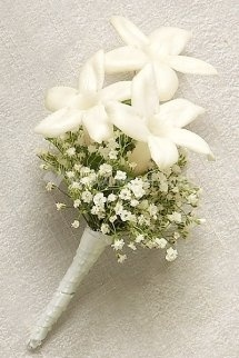 Stephanotis and Gypsophila Buttonhole
