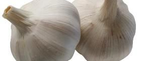 Health Effects of Japanese Garlic | LIVESTRONG.COM