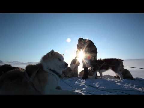 #Dogsledding in #Greenland