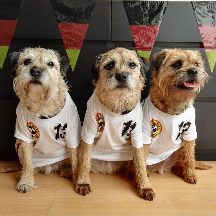 Cockapoo Puppies Scottish Borders Ideas