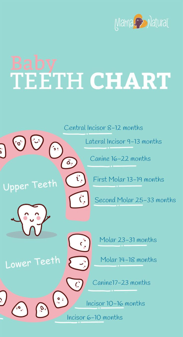 Baby teeth chart what order do they come in natural