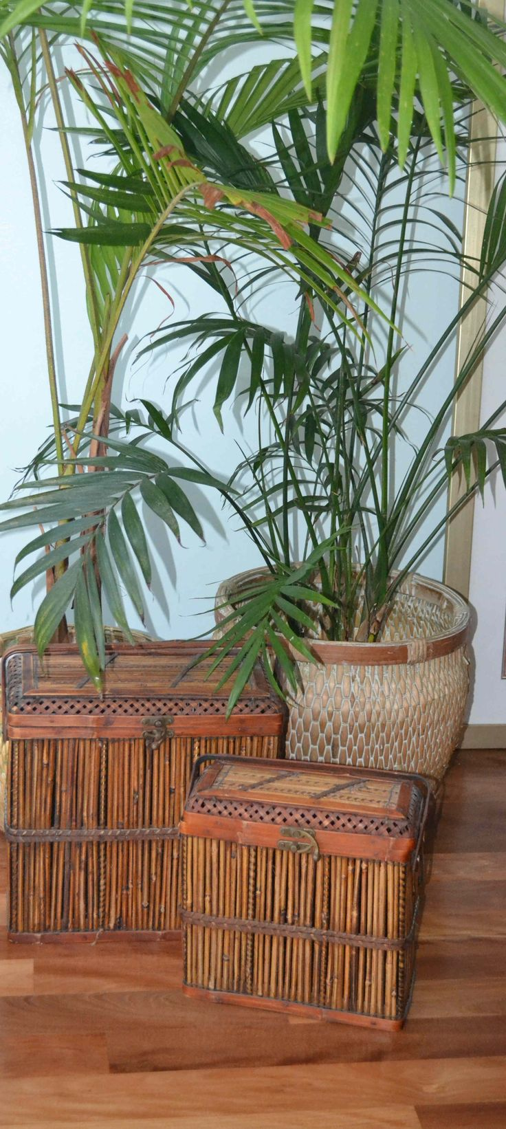 basket-ware and palms adds a tropical feel