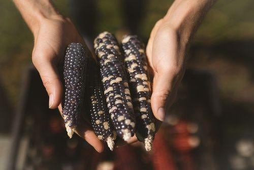 [BLACK FRIDAY] Le Noir à Rungis : le Maïs noir - Black food