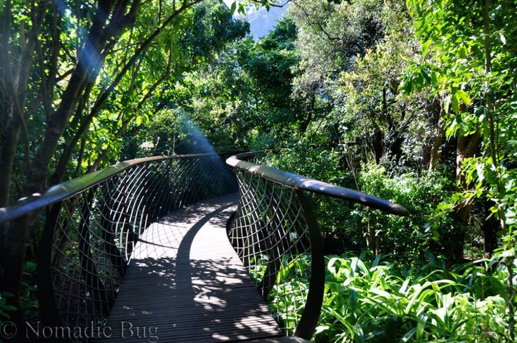 The Boomslang a 100 years of Kirstenbosch Gardens, Cape Town, South Africa Fun Things To Do In Cape Town This Summer Nomadic Existence