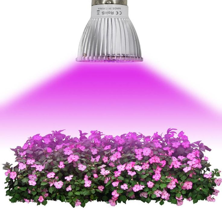 Just in: Growing Lamp http://flowerssecrets.com/products/growing-lamp