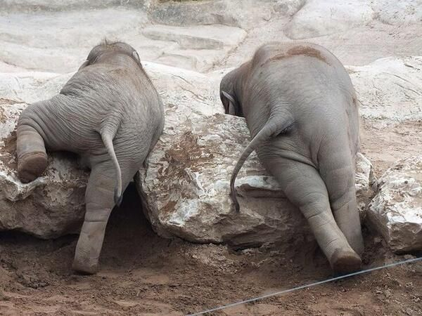 Elephant bottoms!
