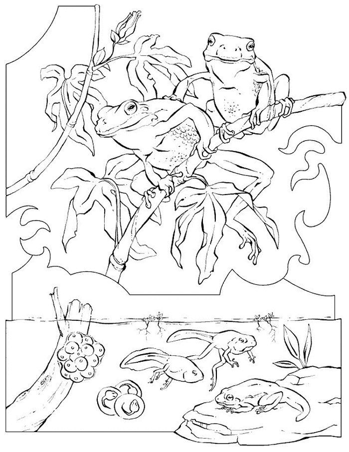 Frog And Tadpole Coloring Pages Frog Coloring Pages Animal Coloring Pages Zoo Coloring Pages
