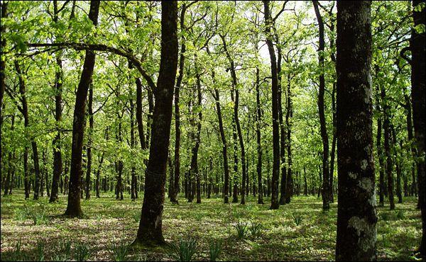 Προορισμοί | Φολόη: Περπατώ εις το δάσος...