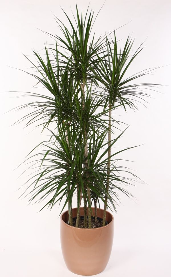 10-air-purifying-plants-for-your-home-&-office_03