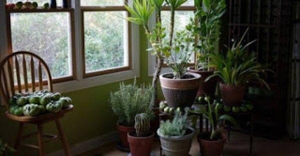 Αυτά τα φυτά φιλτράρουν τον αέρα στο σπίτι από επικίνδυνα δηλητήρια (φωτο)