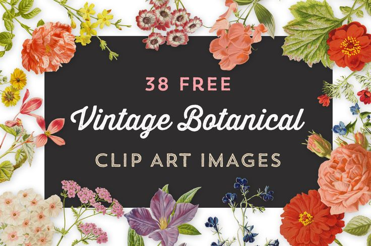 Royalty Free Images – Vintage Botanical Illustrations Set 3 - http://vintagegraphics.ohsonifty.com/royalty-free-images-vintage-botanical-illustrations-set-3/
