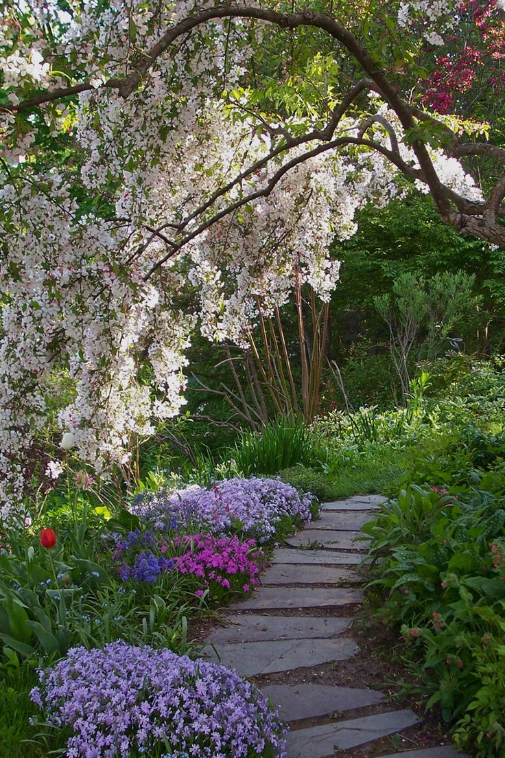 Spring path under a weeping cheery in jane 39 s garden maine for Garden path