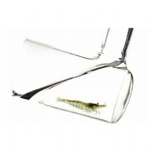 Glass Shrimp Catcher - Aquarium Gardens