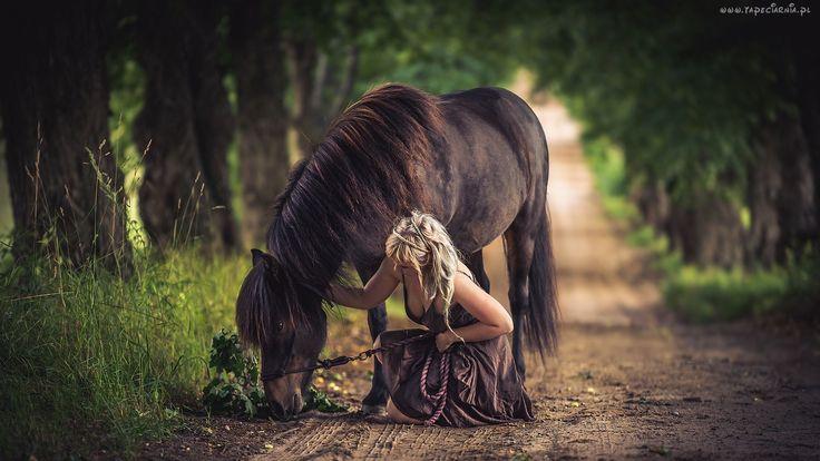 Droga, Koń, Dziewczyna