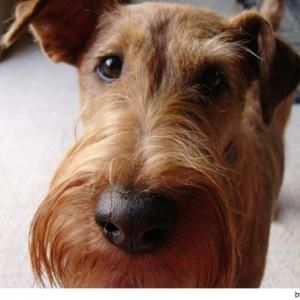http://seedogpictures.com/male-dog-names-with-meanings-male-dog-names/ - Male dog names - The choice of names is an important issue therefore we are providing a big list of male dog names with meanings.