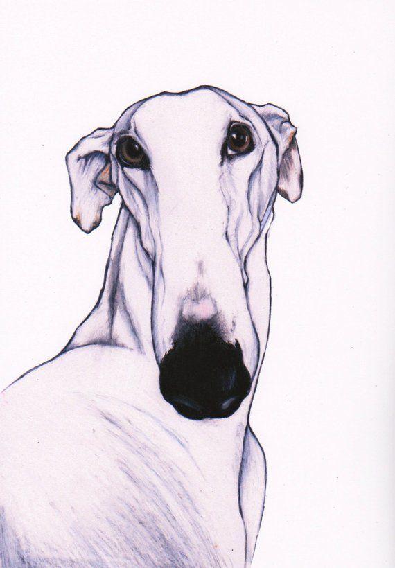 Greyhound Art Print Sighthound Art Signed Giclee Print White Greyhound Wall Art Greyhound In Art Fine Art Print Greyhound Drawing Animales Arte Galgo