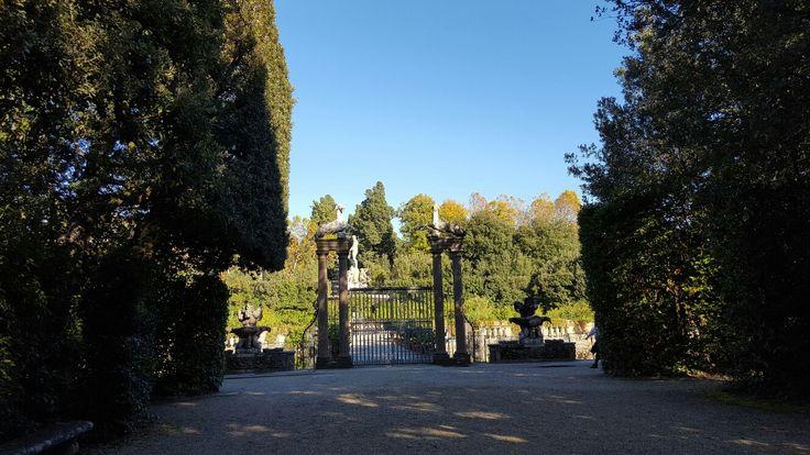 Limonaria, giardino dei Boboli